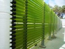Allmircroalgae